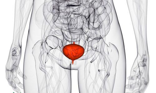 Заболевания мочевого пузыря отмечаются как у взрослых пациентов обоего пола, так и у детей, но у женщин диагностируются в 3 раза чаще
