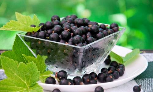 Ягоды смородины оказывают противовоспалительное и мочегонное действие